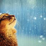"Einzelausgaben aus ""Charming Moments Vol. 1"" Raining (PDF-Ausgabe)"